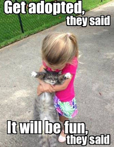 Cat might be changing it s mind about adoption. . . | Fun ...