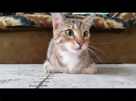 Cat Reacts to Watching Horror Movie