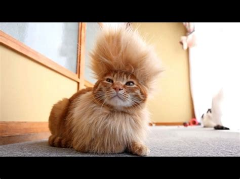 CATS you will remember and LAUGH all day! - World's ...