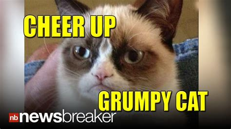 Cheer Up, Grumpy Cat!: Internet Sensation Kitty Gets ...