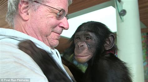 Chimpanzee Tommy star of new documentary on struggle is ...