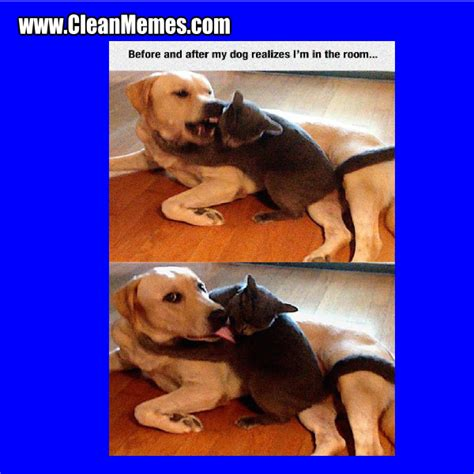 Clean Cat And Dog Memes | Cute Cats