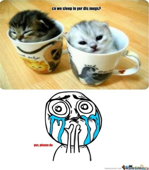 Cute Cat Mom Please Memes. Best Collection of Funny Cute ...