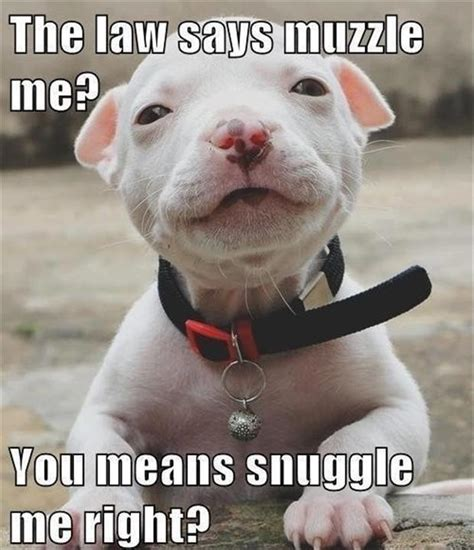 cute dogs funny pictures   Dump A Day