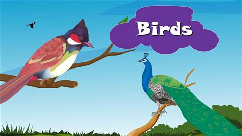 Different Kinds Of Birds And Their Names | www.pixshark ...
