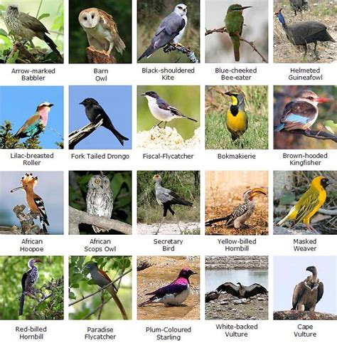 Different Types Of Birds And Their Names Pictures to Pin ...