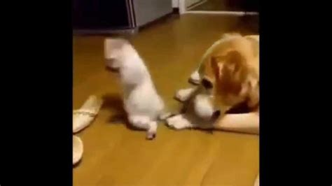 dog and cat funny videos   DriverLayer Search Engine