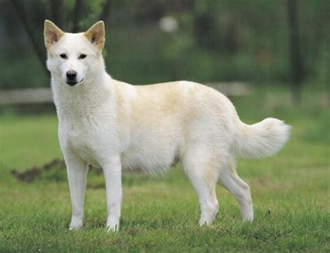 Dog Breeds That Start With 'C' | Pets World