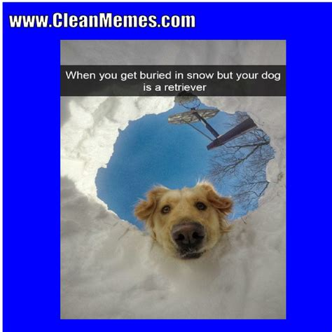 Dog Memes | Clean Memes – The Best The Most Online