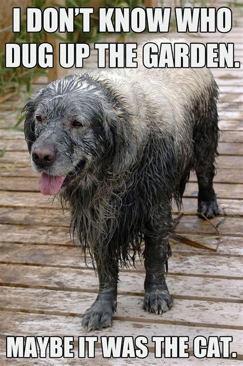Dog memes, part 5: The good, the sad, and the funny | Dog ...