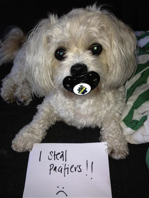 dog shaming, funny dogs   Dump A Day