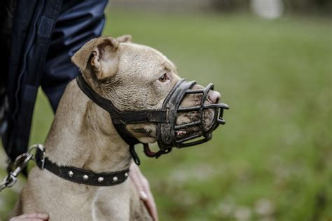 Dogs and muzzle training   How to muzzle train your dog ...