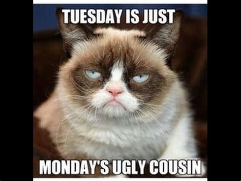 EPIC GRUMPY CAT MEMES  FOR KIDS .mpeg   YouTube