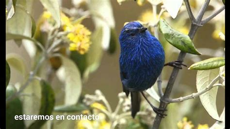 Especies de aves diferentes   YouTube