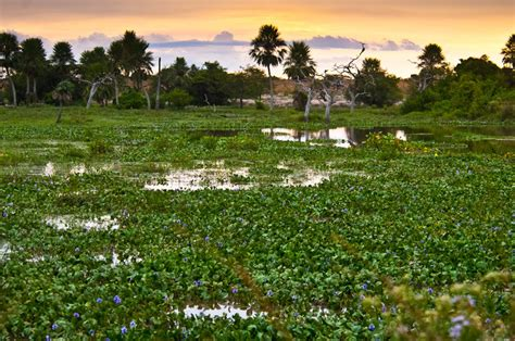 Explore the Ibera Wetlands by boat, best known for its ...