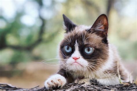 Fluffy, grumpy cat. | We Know How To Do It
