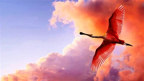 Flying Birds HD Picture Wallpapers 11689   Amazing Wallpaperz