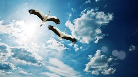 Flying Birds Sky Nature Full HD Wallpapers   New HD Wallpapers