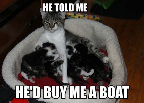 Forever Resentful Mother Cat | Cats | Know Your Meme
