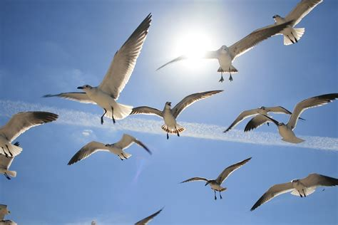 Free photo: Flying, Birds, Sea, Birds Flying   Free Image ...