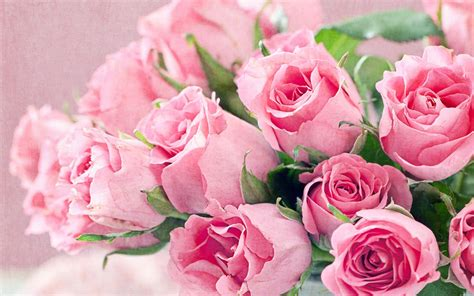 Free pictures of pink flowers   BBCpersian7 collections