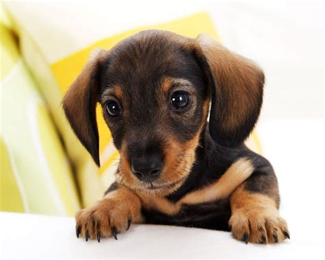 Free Small Dogs Photograph | Pictures For Everyone,,,no Trash