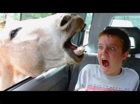 Funniest and most hilarious moments on Earth that can make ...