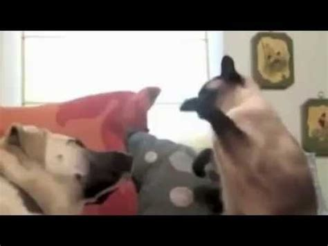 Funniest cat video ever  by Bill Curtis    YouTube