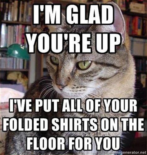 Funny Animal Pictures   60 Pics