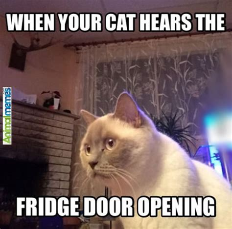 Funny Appropriate Cat Memes | www.imgkid.com   The Image ...