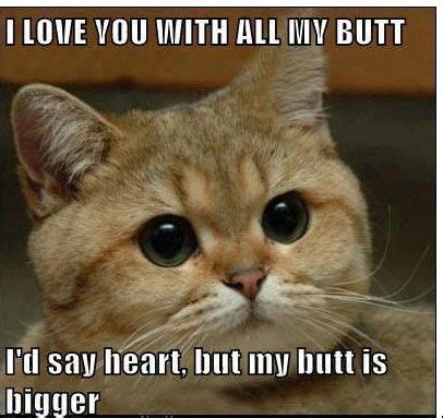funny cat i love you with all my butt.jpg  406×383  | True ...