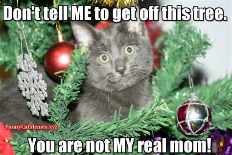 Funny Cat In Christmas Tree!   Funny Cat Christmas MEME