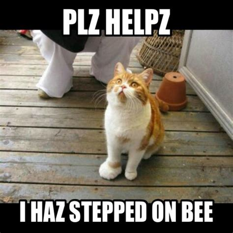 Funny Cat Memes   40 Hilarious Pictures!