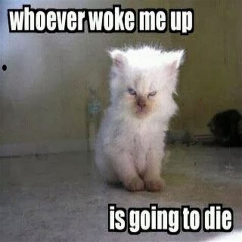 Funny Cat Memes   40 Hilarious Pictures!   Page 2