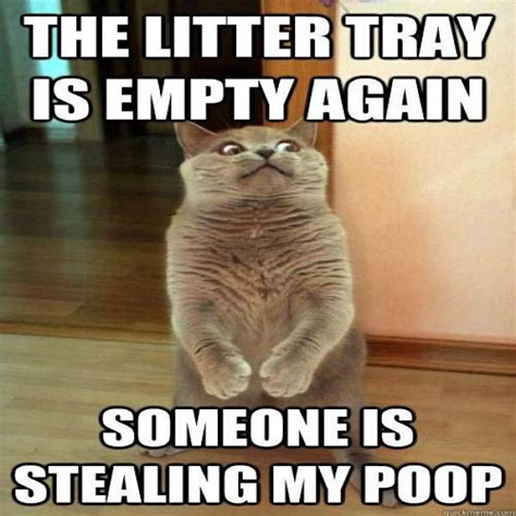 Funny Cat Memes   40 Hilarious Pictures!   Page 5