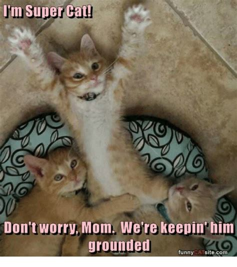 Funny Cat Memes of 2017 on SIZZLE | Funny Cats Memes