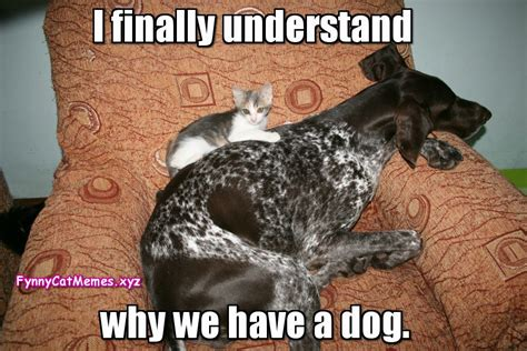 Funny Cat Memes | www.pixshark.com   Images Galleries With ...