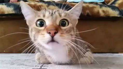 Funny Cat Videos Compilation HD YouTube