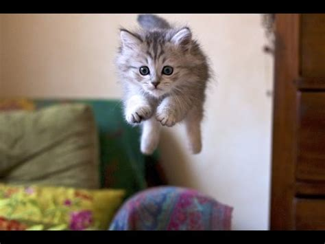 Funny Cats | Best Funny Cat Videos Ever | Funny Kitty Cat ...