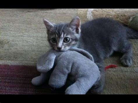 Funny Cats Compilation   Funny Cat Videos Ever  Funny ...