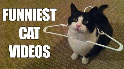 Funny Cats Compilation [MUST SEE] Funny Cat Videos 2016 ...