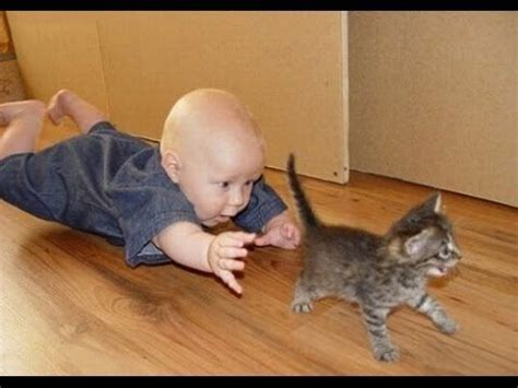 Funny Cats Video   Funny Cat Videos Ever  Funny Videos ...