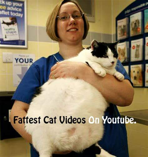 funny cats video youtube image search results