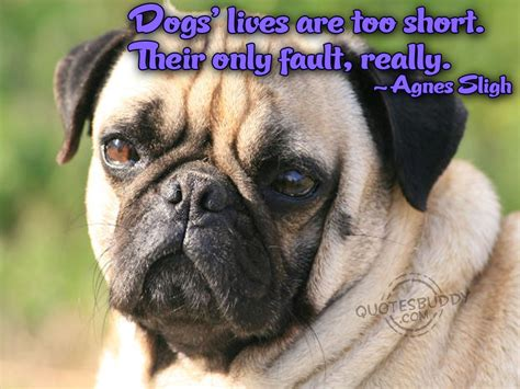 Funny Dog Quotes And Sayings. QuotesGram