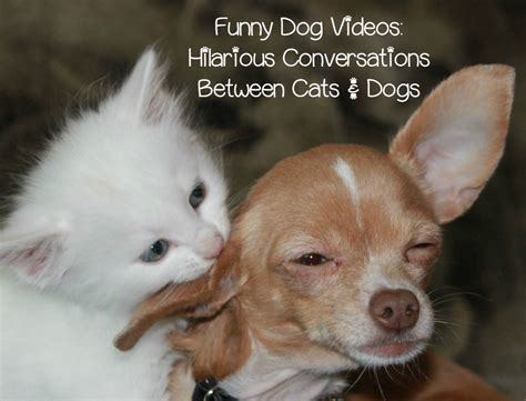 Funny Dog Video: Cat Takes on a Beagle + Talking Pet Clips