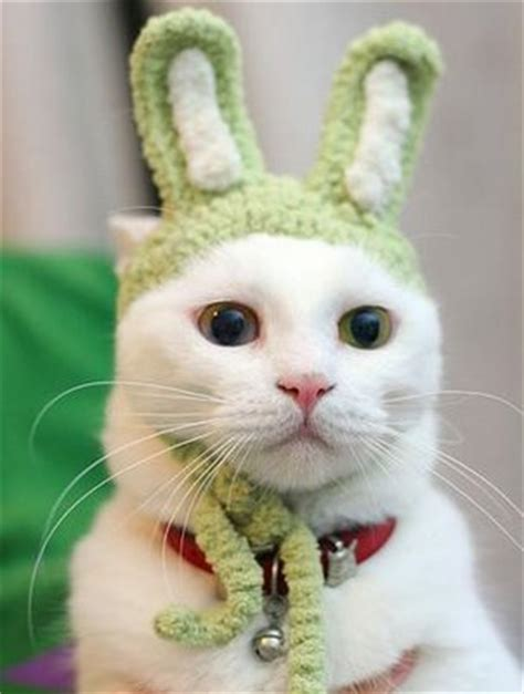 Funny Gag Gifts: Top 10 Funny Cat Videos on YouTube
