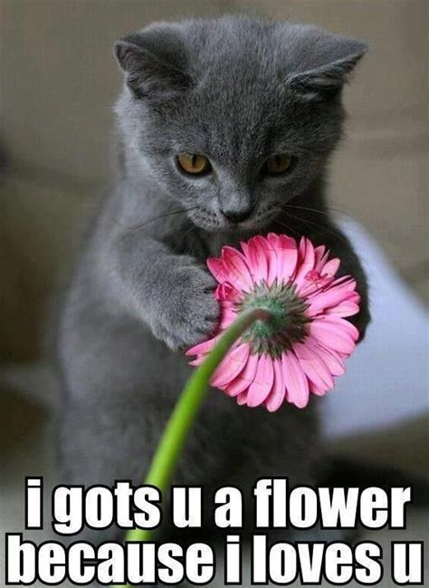 Funny Memes   Cute Kitten Loves You With Flower | Super ...