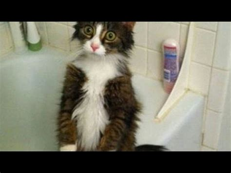 Funny reasons why YOU SHOULD HAVE A CAT  Funny CAT video ...