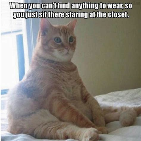 Funny Staring Cat Meme | Funny Cats   Downloadfeast
