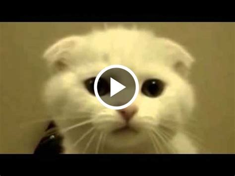 Funny talking and singing cat   Funny Cat Videos
